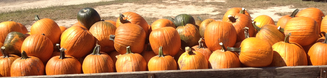 Halloween Fall Pumpkins Virgina